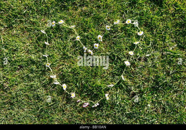 Heart shape made up of daisies. - Stock Image