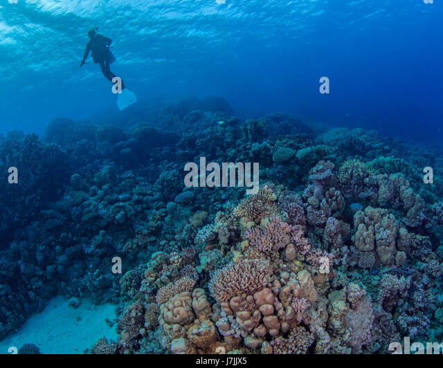A handicapped female scuba diver, a paraplegic young woman free from her wheelchair, braves the open waters of the - Stock Image