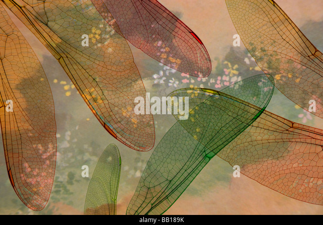Montage abstract of dragonfly wings and flower background. - Stock Image