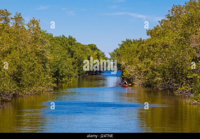 Canoeing on the Buttonwood Canal in the Flamingo area of Everglades National Park Florida - Stock Image
