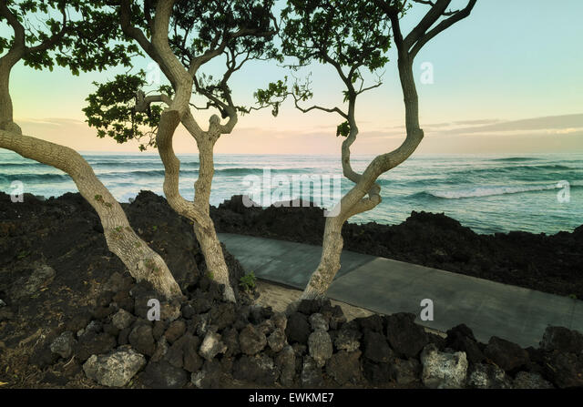 Heliotrope trees with ocean. The Big Island, Hawaii. - Stock Image