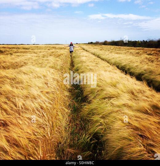 Teenage girl in wheat field in Cornwall - Stock Image