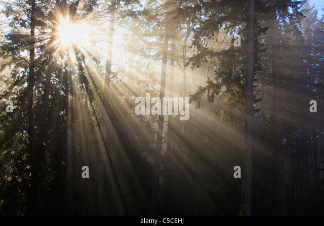 Sun Shining Through Morning Fog And Trees; Happy Valley, Oregon, United States Of America - Stock Image