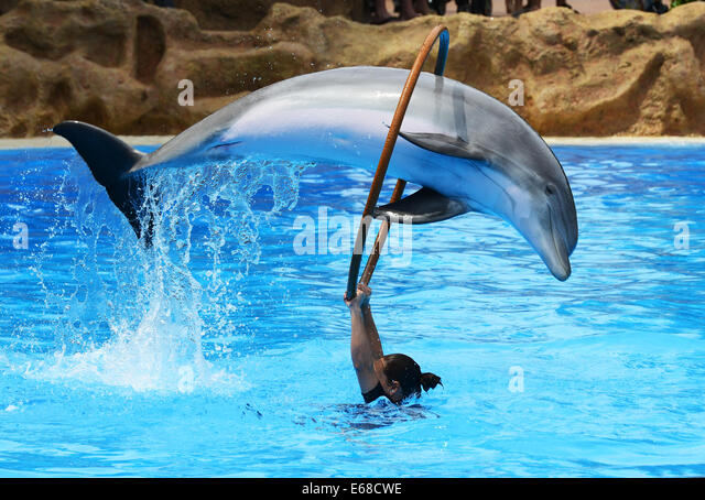 Loro Parque, Tenerife, Canary Islands, tourists watch Dolphin display performance, Loro wildlife park or zoo, Tenerife, - Stock Image