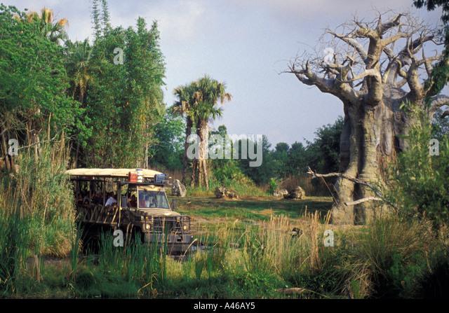 Disney World Animal Kingdom safari truck baobob trees - Stock Image