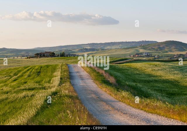 Italy, Tuscany, Crete, Val d'Orcia, View of path towards farm - Stock Image