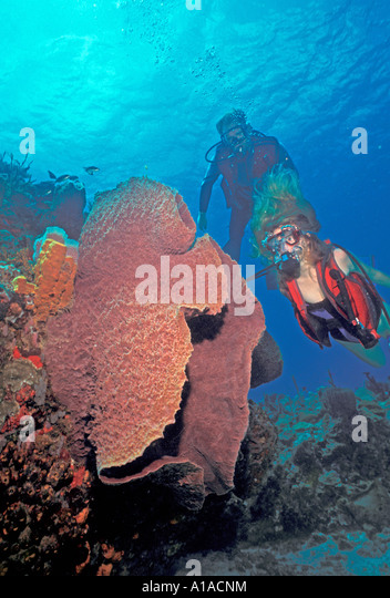 St Lucia divers anse chastanet reef - Stock Image