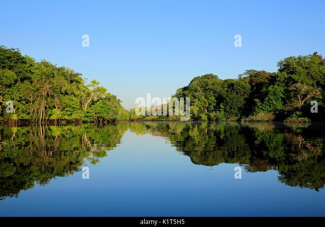 Amazon, the Amazon Rainforest, Amazonas, jungle, rainforest, forest, nature photography, nature wilderness, Brazil, - Stock Image