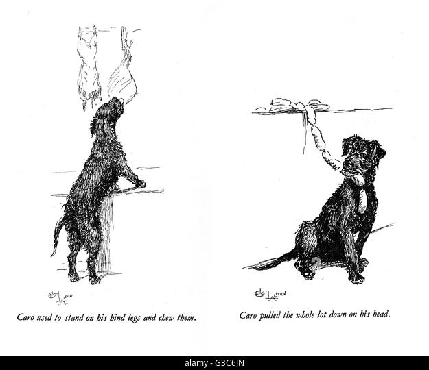 Illustrations of a black dog called Caro, by Cecil Aldin.  Seen here getting hold of meat and sausages in a butcher's - Stock-Bilder