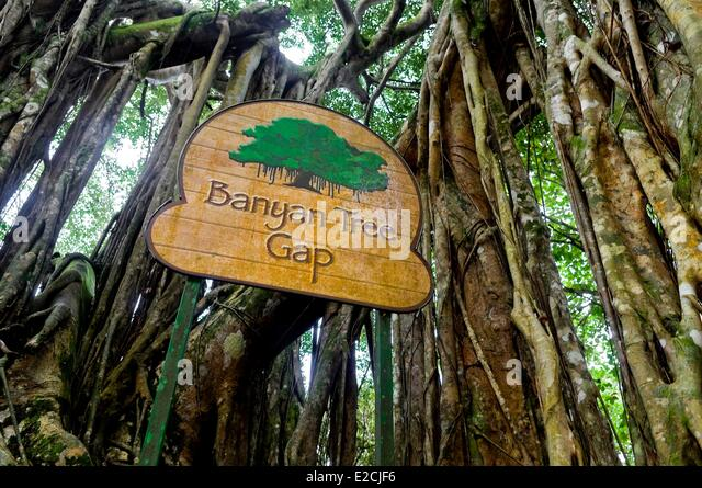 slogan of banyan tree Banyan tree world school is the only play group and pre-school in dehradun is running under the umbrella of banyan tree educational and welfare society.