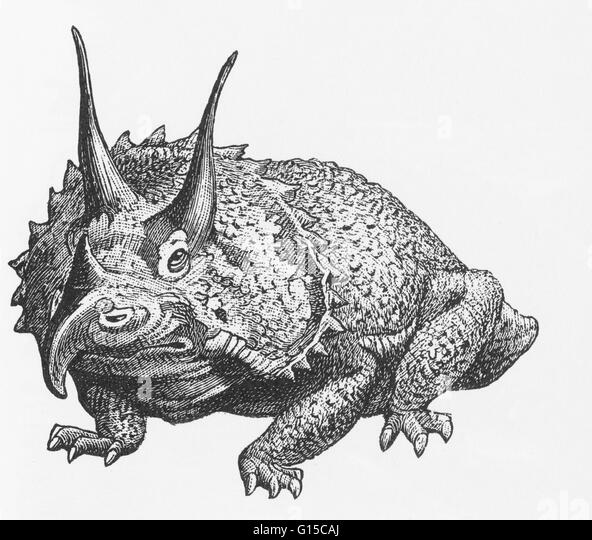 Illustration of a triceratops. - Stock Image
