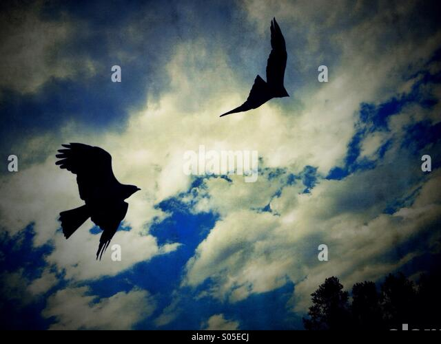 Birds Of Prey Silhouette Stock Photos Amp Birds Of Prey