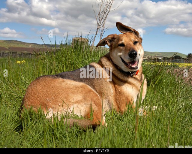 Happy Dog hills animal pet landscape travel scenic green grass - Stock-Bilder