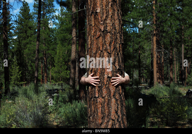 Arms of Man Hugging Tree in Forest - Stock Image
