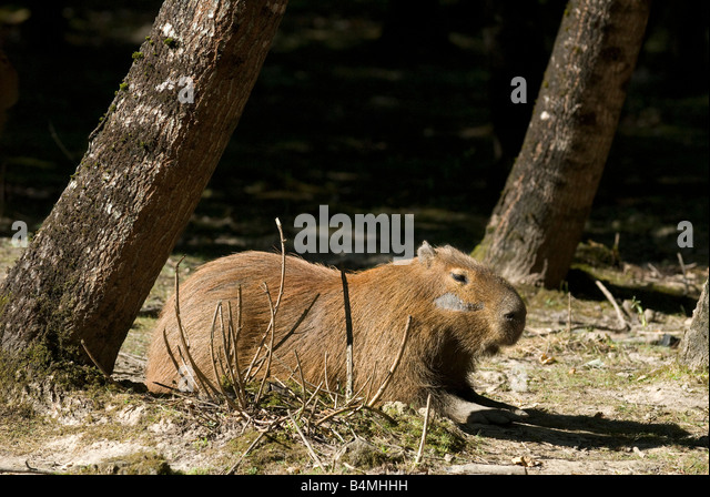 Haute touche stock photos haute touche stock images alamy for Zoo haute touche
