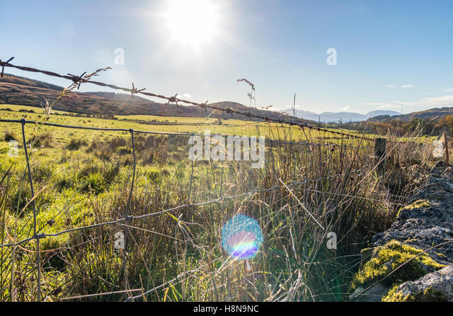 Close up of barbed wire fencing around grass field - Stock Image
