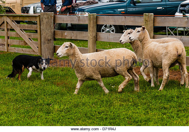 East Of England Agricultural Society Dog Show