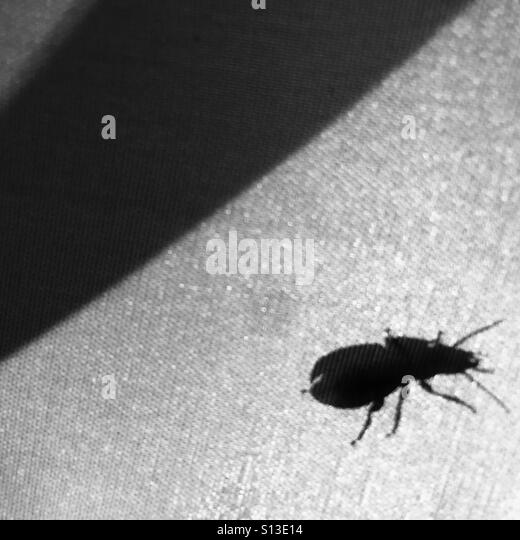 A beetle silhouetted on the outside of a tent. - Stock Image