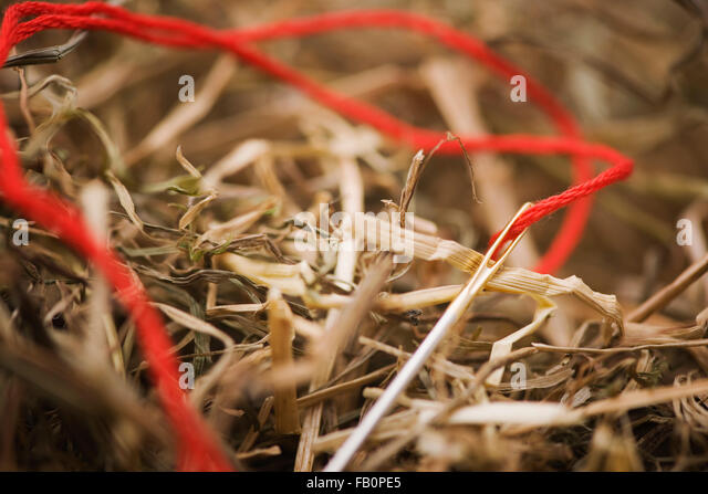 great stuff-needle with red thread in the haystack - Stock-Bilder