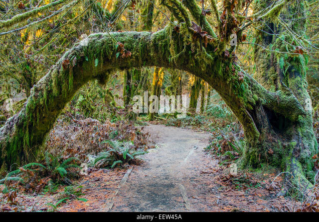 mosses-covered-tree-hoh-rainforest-olymp