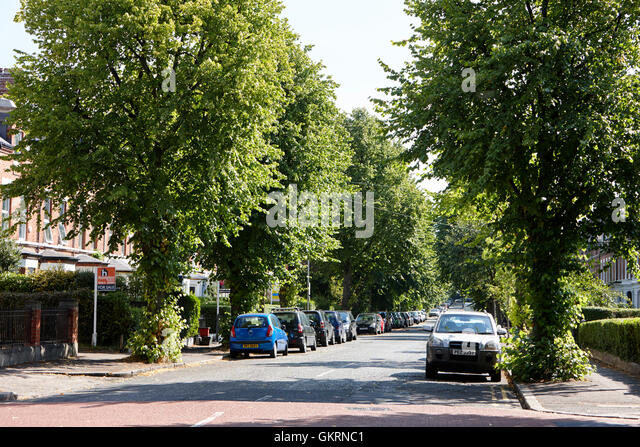tree lined north parade in affluent ormeau road area of south belfast northern ireland - Stock Image