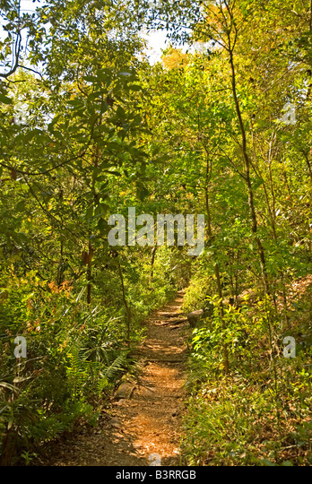 Florida hiking trail Gold Head Branch State Park - Stock Image