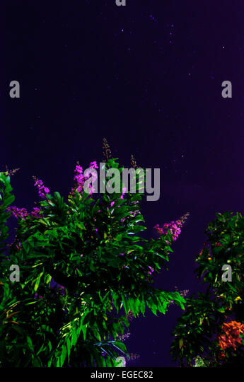 heaven, plants, tree, flowers, stars, night, green, spiral, landscape, blue, firmament,  orion, nature, life, live, - Stock Image