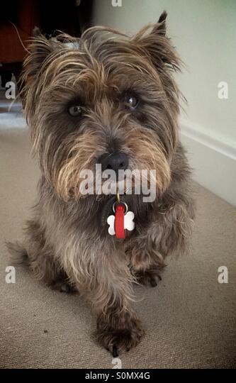 Sore paw! - Stock Image