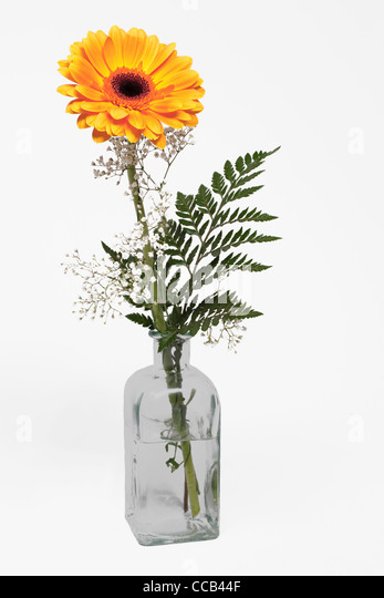 eine gelbe Gerbera steht in einer Glasvase   a yellow Gerbera upright in a vase - Stock Image