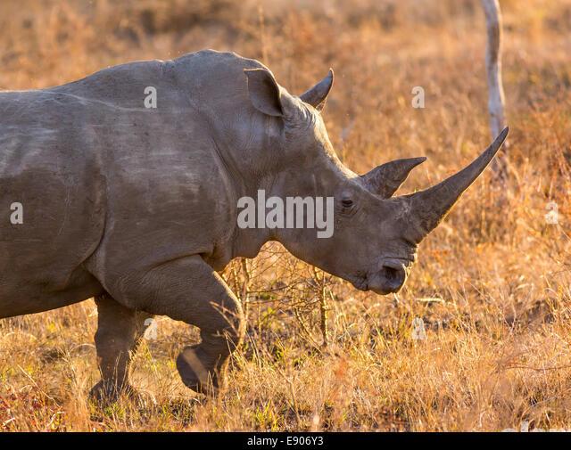 Rhino Fund