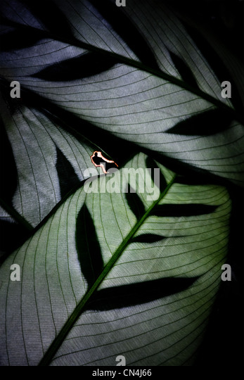 Backlit leaf pattern - Stock Image