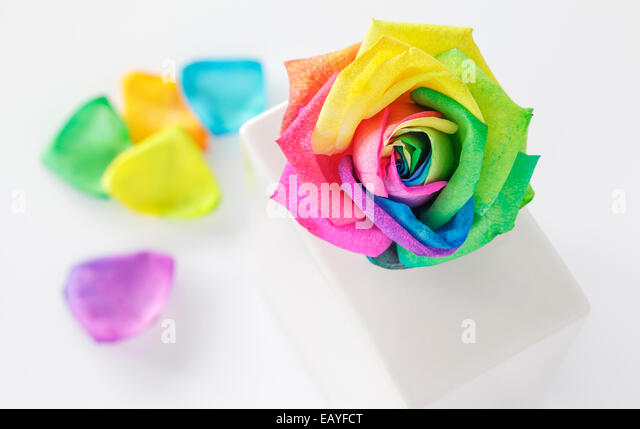 Rainbow Rose in white vase - Stock Image