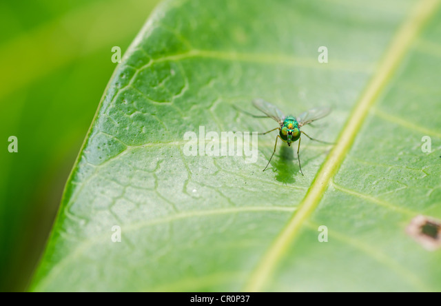 fly macro in green nature or in the city or on food - Stock Image