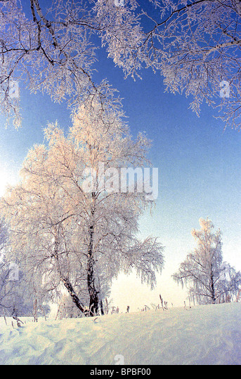 Frosts in Tyumen region reach minus 40 degrees centigrade - Stock Image