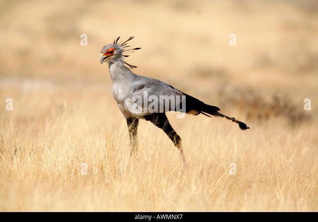 African Grassland Birds African Grassland Bird...