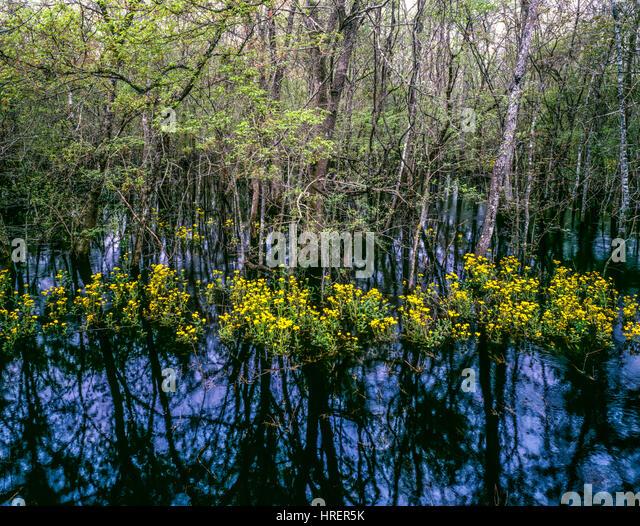Swamp flowers and forest, St. Marks National Wildflife Refuge, Florida - Stock-Bilder