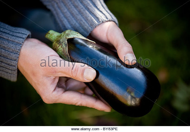 A man holding an aubergine, close-up - Stock Image
