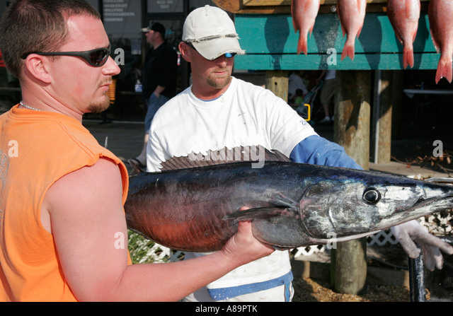 Wahoo fish stock photos wahoo fish stock images alamy for Zeke s fish
