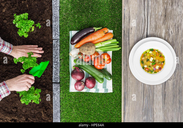 Food from farm to table: farmer planting seedlings in the garden, harvested vegetables and tasty soup in a dish - Stock Image