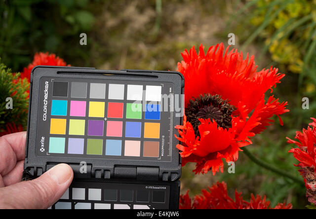 Use of calibrated colour target to obtain accurate colour rendition in digital photography - Stock Image
