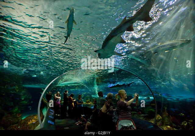 Visitors enjoy Dangerous Lagoon on moving walkway at Riply's Aqarium of Canada at base of CN Tower, Toronto, - Stock Image