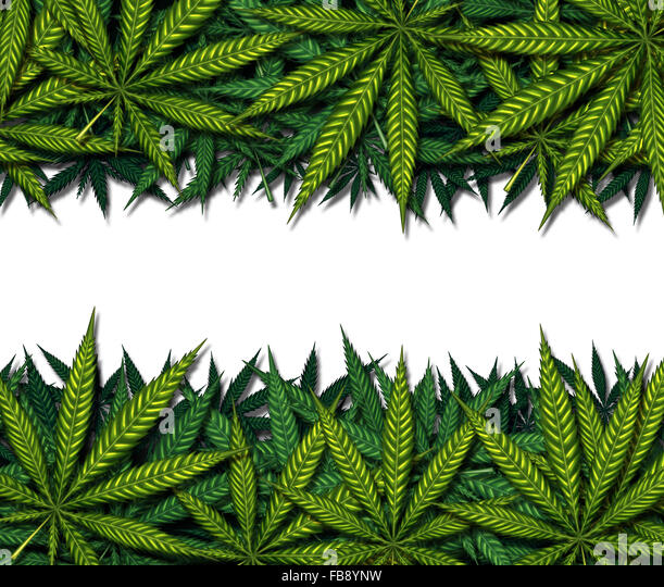 Marijuana border design on a white background as a symbol for medicinal pot or medical weed as a group of green - Stock Image