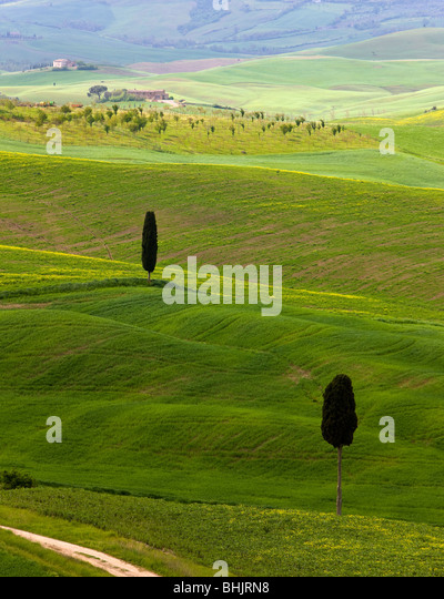 Italy, Tuscany, Near Pienza Typical tuscan landscape with cyprus trees - Stock Image