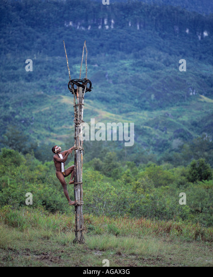 Dani tribesman climbing a defensive lookout, Irian Jaya, Indonesia - Stock Image