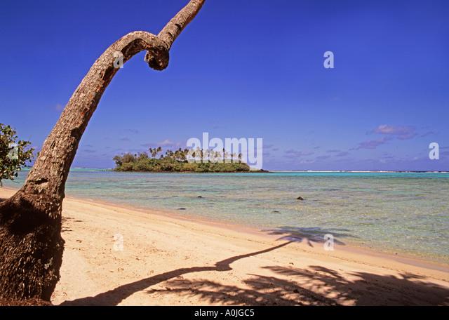 South pacific Cook Islands Raratonga Muri beach palm tree - Stock Image