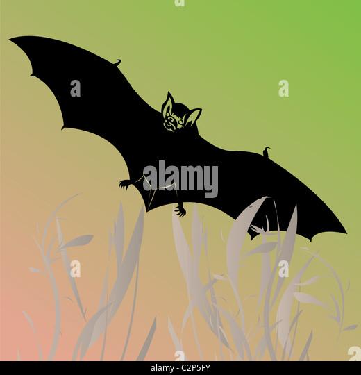 bat illustration - Stock Image
