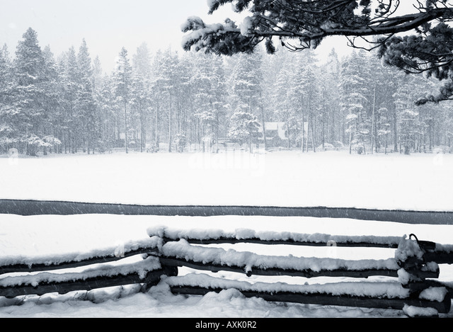 snowing winter trees cold white season Christmas nature forest fence cover rest melt still branch wood - Stock Image