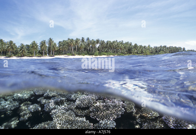split image of corals and palm trees - Stock Image