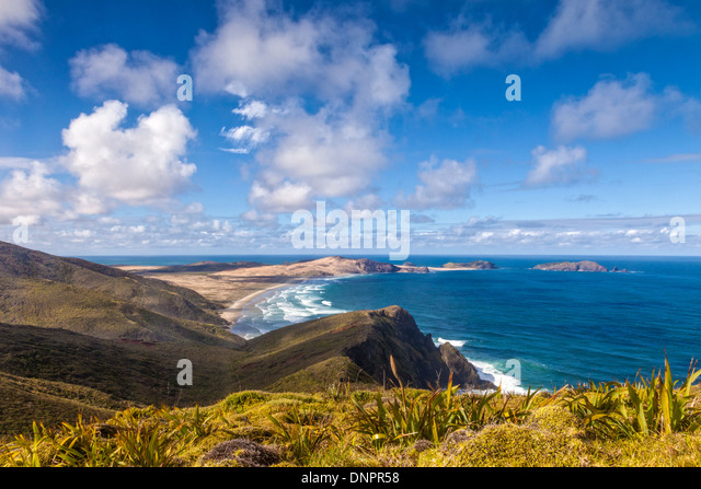 Cape Maria van Diemen from Cape Reinga, Northland, New Zealand. In the foreground are the miniature flax which grow - Stock Image