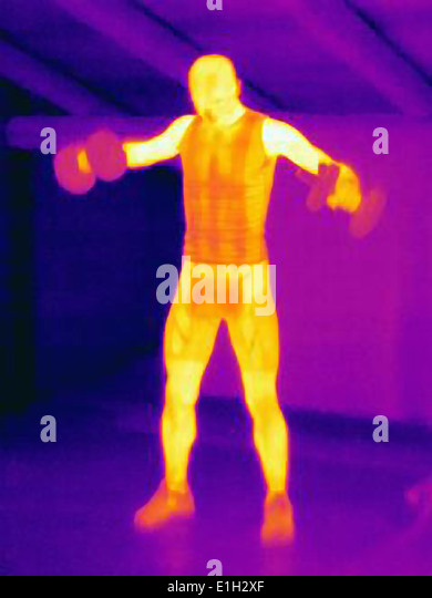 Thermal image of man training with barbells. The image shows the heat produced by the muscles - Stock Image